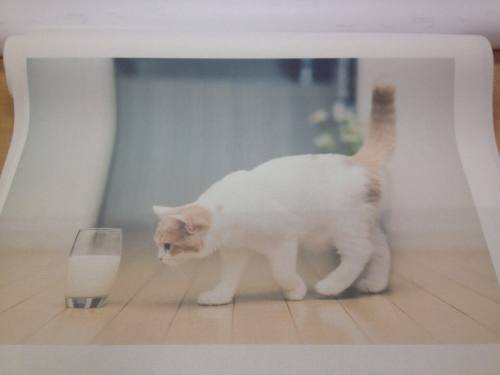 фотообои в рязани: